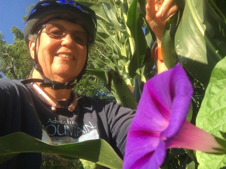 Corn field beauty bikebreak