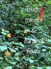 flowers gsmnp